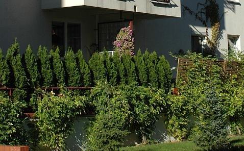 Taras i ogródek we wspólnocie