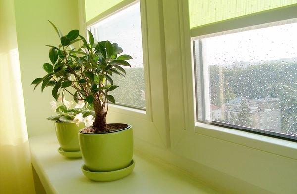 Wymiana okien a prawa wspólnoty mieszkaniowej
