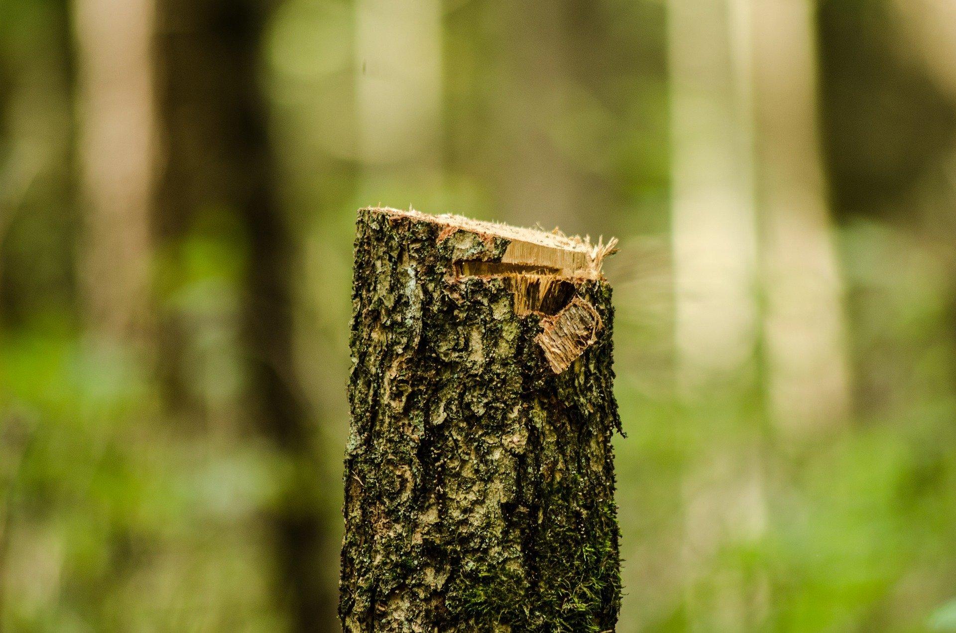 Czy sąsiad może legalnie zmusić nas do wycinki drzew?