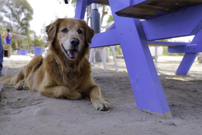 Zakaz wyprowadzania psów na trawnik; pixabay